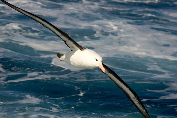 antartica071